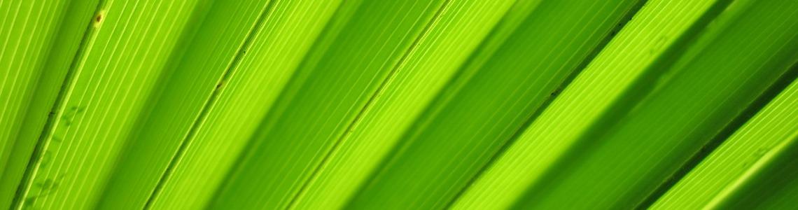 Despre Asociatia Tot Mai Verde
